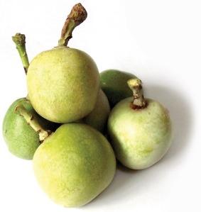 marula-fruit-green